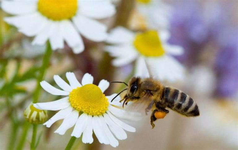 - pszczola.jpg